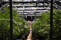 : TLRY | Tilray, Inc. - Class 2  News, Ratings, and Charts