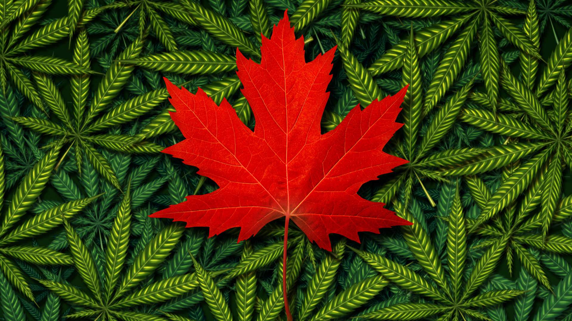 : ACB | Aurora Cannabis Inc. Common Shares News, Ratings, and Charts
